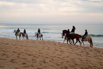 Horse Riding in Marbella